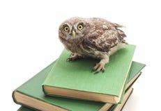 Jeden mała sowa na książkach fotografia stock