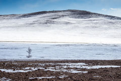 Jeden mały drzewo przy zim gór tłem Obrazy Royalty Free