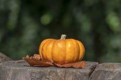 Jeden mandarynki dekoracyjna bania na drewnianym fiszorku, jaskrawy pomarańczowy kolor, jesień sezon obraz stock