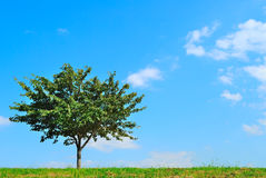 Jeden niebieskie niebo drzewo i Zdjęcie Stock