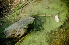 Jeden nieboszczyk ryba Obraz Stock