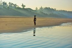 Jeden no może zbierać wszystkie piękne skorupy na plaży obraz royalty free
