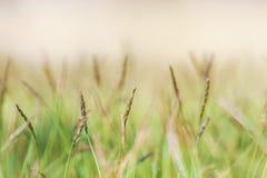 Jeden okwitnięcie trawa na pomarańcze ziemi Zdjęcia Stock