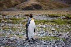 Jeden pingwin w arktycznym obraz stock