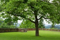 Jeden pojedynczy drzewo Zdjęcie Royalty Free