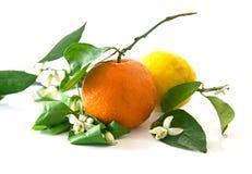 Jeden pomarańcze i cytryna z pomarańczowymi okwitnięciami, odosobnionymi zdjęcie royalty free