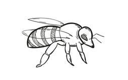 Jeden pszczoła Zdjęcia Royalty Free