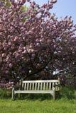 jeden pusty ławki parku Obrazy Royalty Free