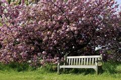 jeden pusty ławki parku Zdjęcie Stock