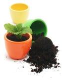 Jeden roślina w żółtej filiżance i filiżance z ziemią. Zdjęcia Royalty Free