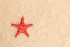 Jeden rozgwiazda lokalizują na piaskowatym tle Zdjęcia Stock