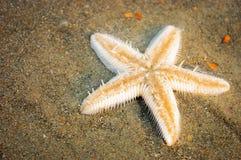 Jeden rozgwiazda na tropikalnej morze plaży Zdjęcia Stock