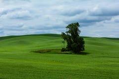 Jeden Samotny drzewo fotografia royalty free