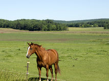 Jeden samotny koń Fotografia Stock