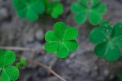 Jeden shamrock liść skupiający się wydźwignięcie od dna fotografia stock