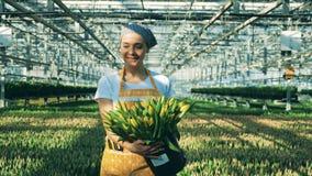 Jeden uśmiechnięta kobieta niesie wiadro z tulipanami w szklarni zbiory
