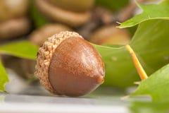 Jeden w frontowym grupowi acorns blisko fotografia stock