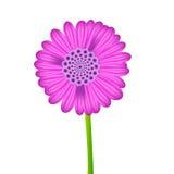 Jeden wektorowy realistyczny purpura kwiat Ilustracji