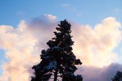 Jeden wysoki śnieżny jedlinowy drzewo przeciw jaskrawemu kolorowemu niebu z chmurami zdjęcia royalty free