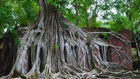 Jeden z drzewem na domu Zdjęcie Royalty Free