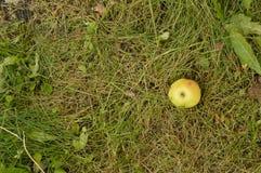 Jeden zielony Jabłczany lying on the beach na trawie, odgórny widok, kopii przestrzeń Zdjęcie Stock