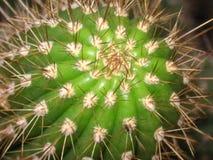 Jeden zielony spiky round kaktus Zdjęcia Stock