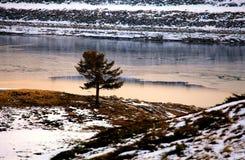 Jeden zimy drzewo Fotografia Royalty Free