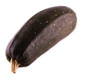 jeden zucchini Obraz Stock