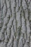Jeder Baum hat, das ihn, besitzen ` s Haut Stockbild