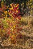 Jedes hat seinen eigenen Herbst Stockbild