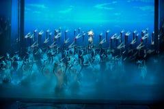 Jedien--Den historiska magiska magin för stilsång- och dansdrama - Gan Po Royaltyfri Bild