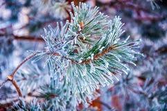 Jedlinowa gałąź zakrywająca śniegiem zdjęcia stock