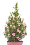 jedlinowe kwiatów menchii garnka róże drzewne Fotografia Stock
