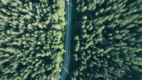 Jedlinowego drzewa Europejski las i czerwieni samochodowy mknięcie na drodze zbiory wideo
