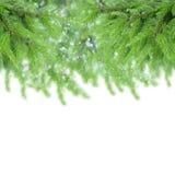 Jedlinowego drzewa granica Obrazy Stock