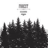 Jedlinowego drzewa granica Lasowego tła sylwetki Drzewna granica ilustracja wektor