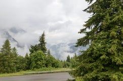 Jedlinowi drewna wśród gęstych chmur, Scalve dolina, Włochy obraz stock