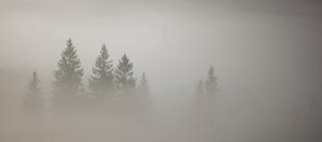 Jedlinowi drzewa w mgle Zdjęcia Royalty Free