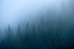 Jedlinowi drzewa w mgle Obraz Royalty Free