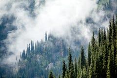 Jedlinowi drzewa zakrywający w mgle Fotografia Royalty Free