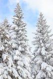 Jedlinowi drzewa zakrywający z śniegiem na zimy górze na jasny pogodnym Zdjęcia Royalty Free