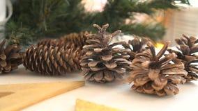 Jedlinowi rożki, w górę Grupa conifer rożki zdjęcie wideo