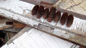 Jedlinowi rożki Zdjęcia Stock