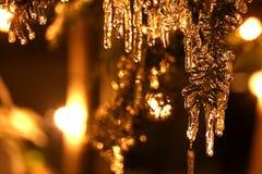 jedlinowi sople tree zdjęcia stock