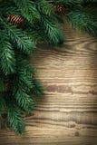 jedlinowy Bożego Narodzenia drzewo Obraz Stock