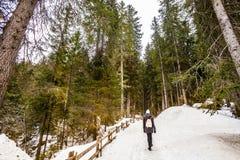 Jedlinowy drewniany las i zima krajobraz z śniegiem zdjęcia royalty free
