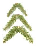 Jedlinowy drzewo royalty ilustracja