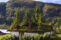 Jedlinowy drzewo na dachu Obraz Stock