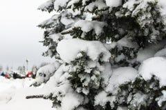 Jedlinowy drzewo pełno śnieg w parku Obrazy Royalty Free
