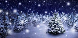 Jedlinowy drzewo w śnieżnej nocy Obrazy Royalty Free